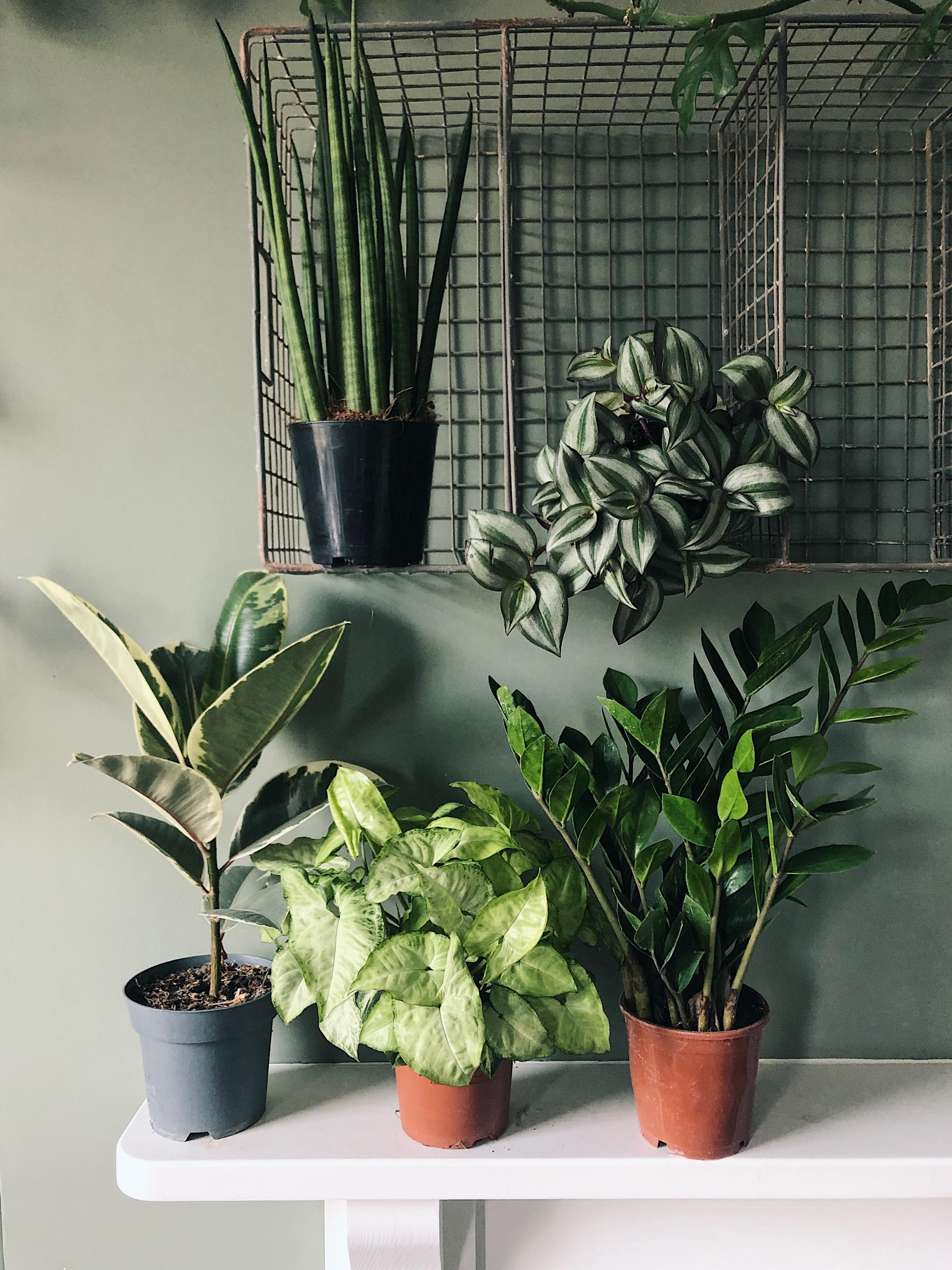 Box 5: indestructible plants (£55)