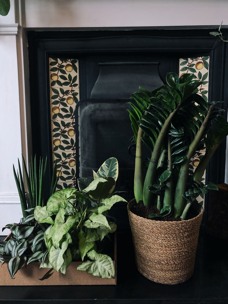 Bespoke houseplant box