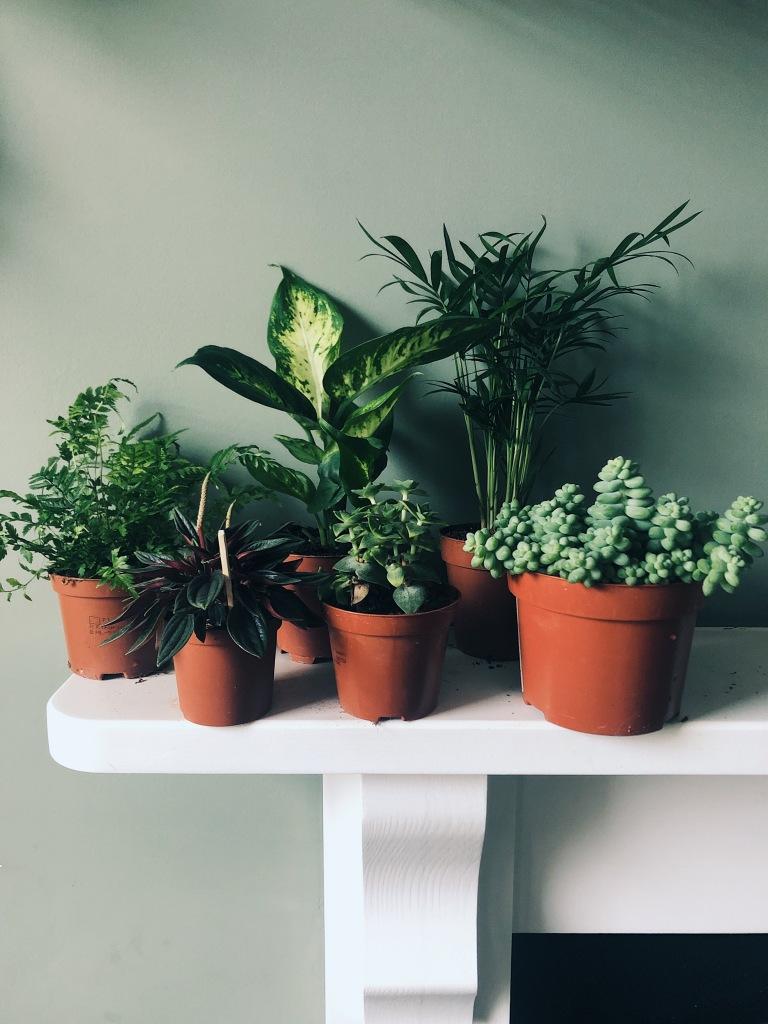 Box 3: baby plant box (£25)