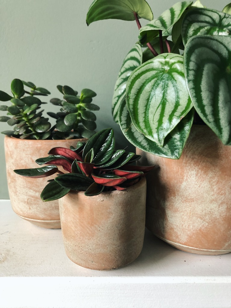 Three plants, three pots (£35)