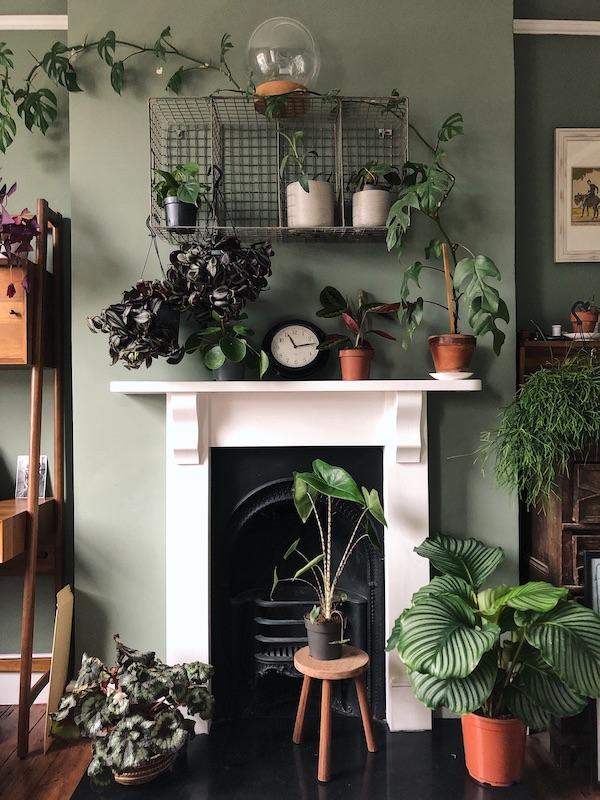Calathea and other plants