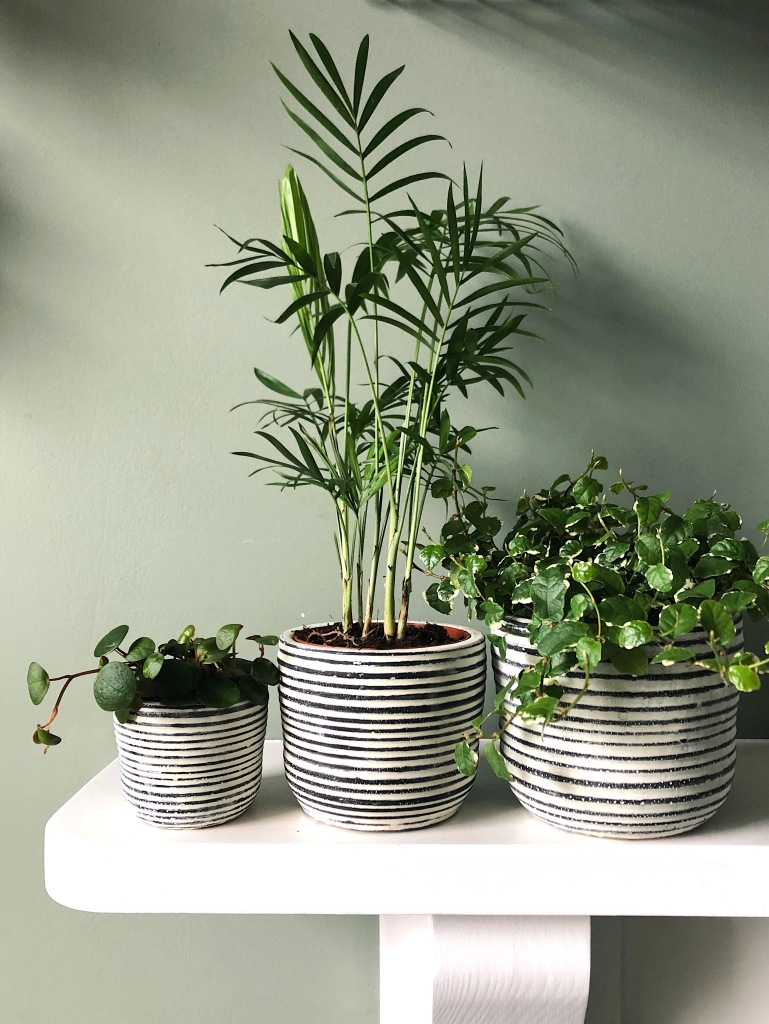 Three plants in stripy pot box (£30)